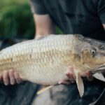 9 Common Carp Fishing Mistakes All Beginners Make
